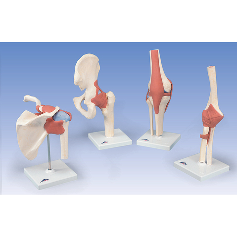 flexible shoulder joint model at meyerdc