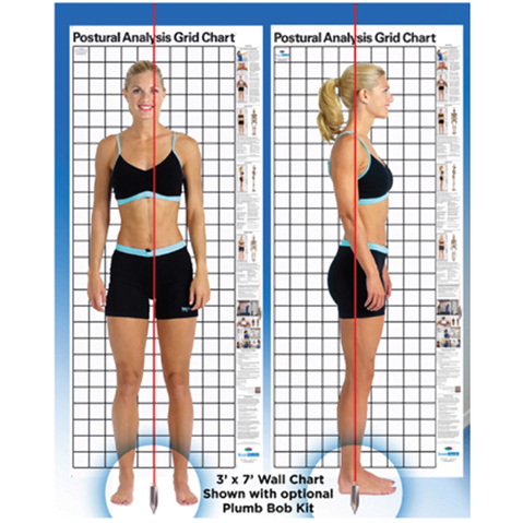 Posture Analysis Chart, Professional Plumb Bob And Setup Kit & More at MeyerDC™